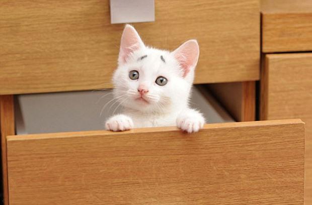 擔心貓006