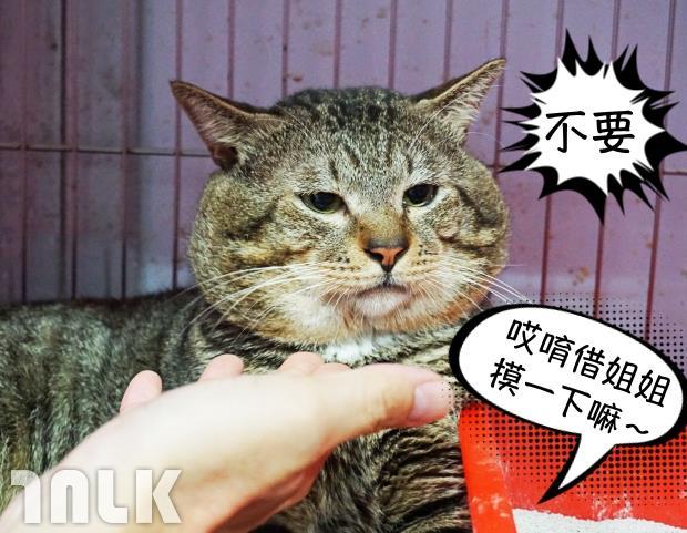 胖虎3.jpg