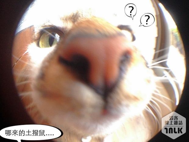 魚眼.jpg