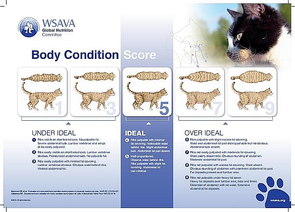 002--body-condition-score--cat-WSAVA.jpg