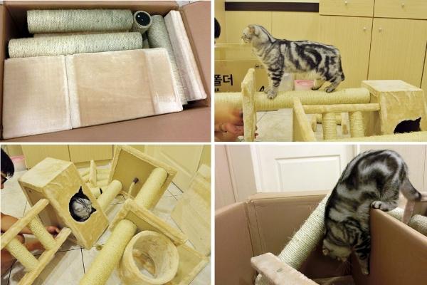 001--大貓跳台開箱