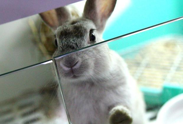 001--愛兔協會認養急難救助.jpg