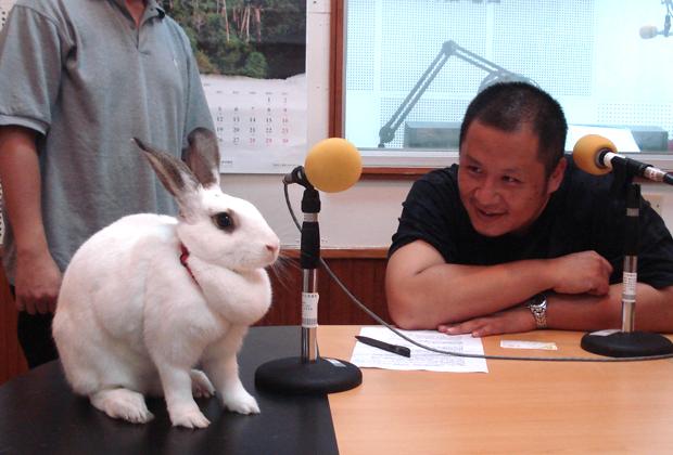 002--愛兔協會認養急難救助.JPG