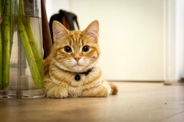 新手養貓前的自我檢視兼快速上手懶人包--001.jpg