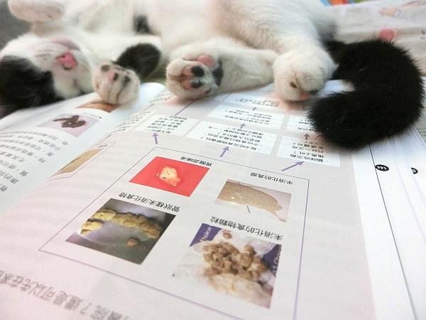 貓咪家庭醫學大百科--004