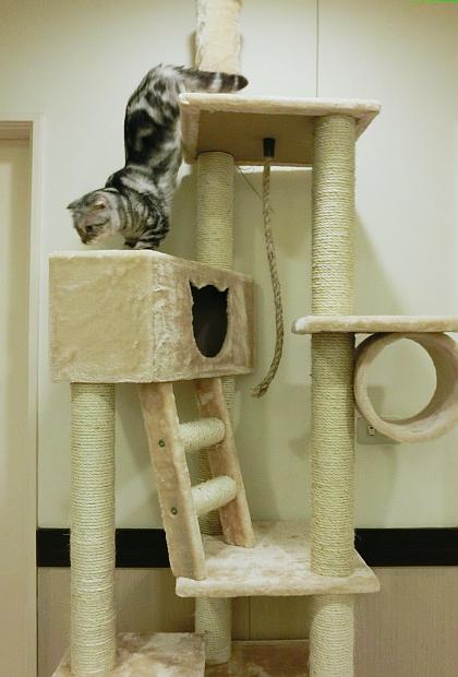 013--大貓跳台整體
