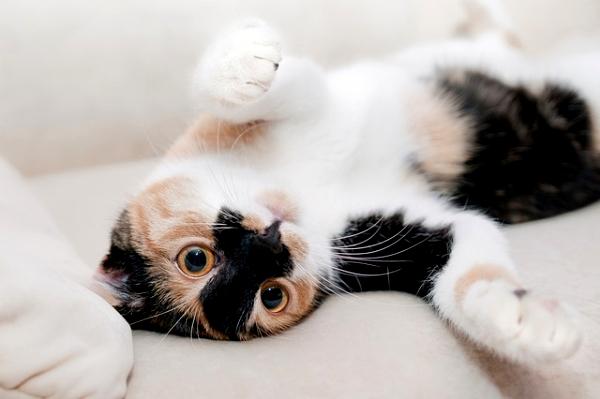 新手養貓前的自我檢視兼快速上手懶人包--002.jpg