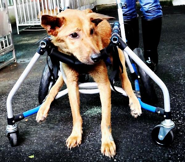 001--新北市零安樂傷殘動物長期照顧方案.jpg