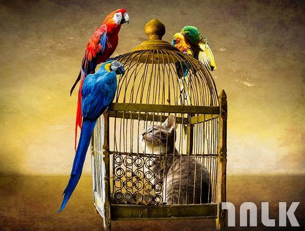 001_放養,鳥,鼠,貓的報恩,避免貓咪抓鳥.jpg