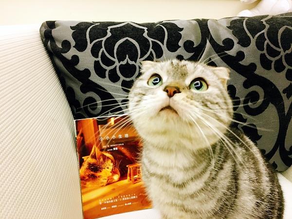 西樹_Q弟樂樂的萌貓遊樂園.jpg