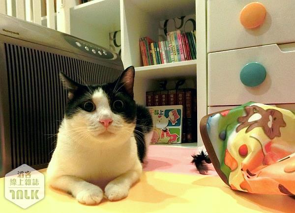004--來抓我吧,自動逗貓器,玩具,Q弟樂樂的萌貓遊樂園.jpg