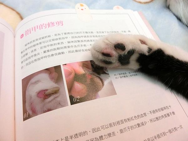 貓咪家庭醫學大百科--003