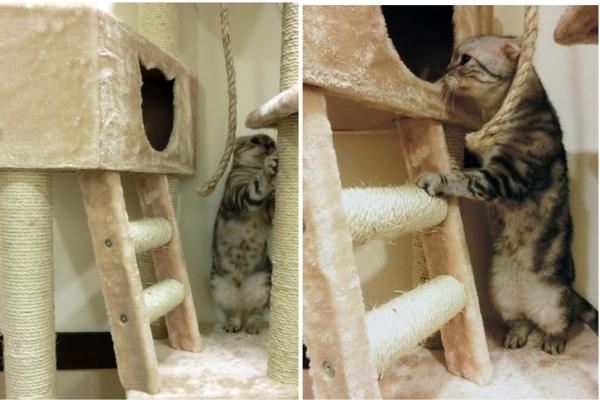 004--大貓跳台第二層