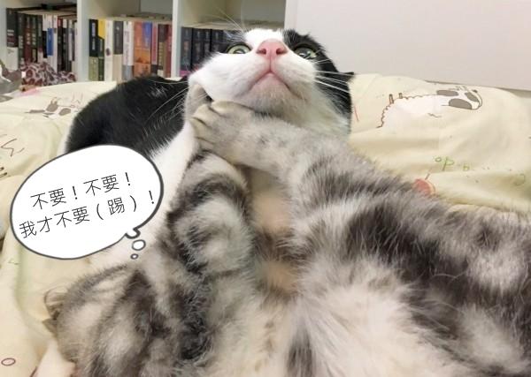 006_Q弟:「不要!不要!我才不要(踢)!!」-1.jpg