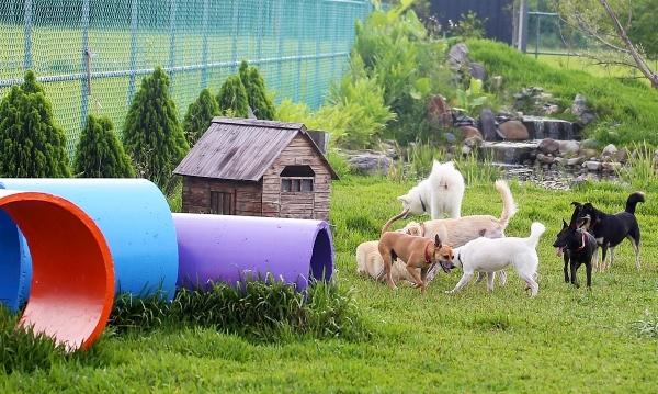 莉丰慧民V_006_從鬼門關救回的狗狗在後園盡情玩耍奔跑.jpg