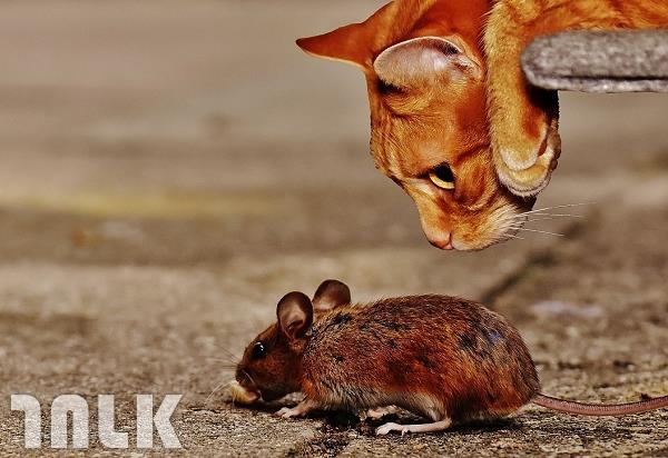 003_放養,鳥,鼠,貓的報恩,避免貓咪抓鳥.jpg