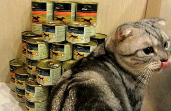 貓罐罐--001-1