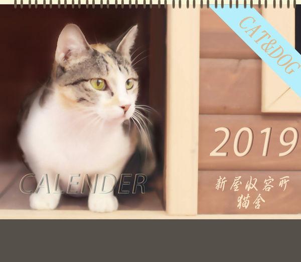 001_新屋收容所 貓舍_001.jpg