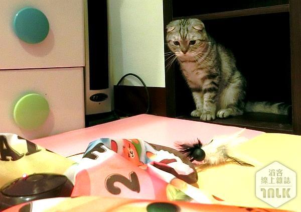 來抓我吧,自動逗貓器,玩具,Q弟樂樂的萌貓遊樂園.jpg