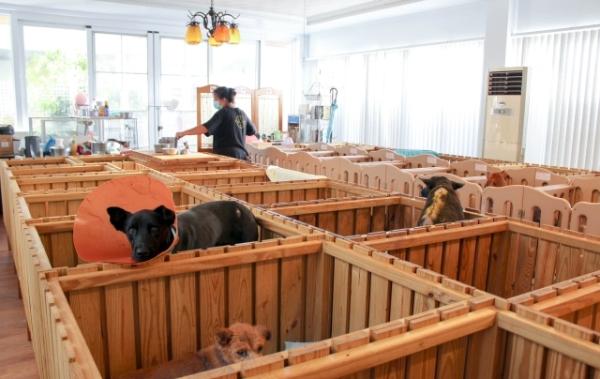 莉丰慧民V_009_莉丰慧館雖然狗口數眾多,但每隻狗狗都能獲得細心的照料.jpg