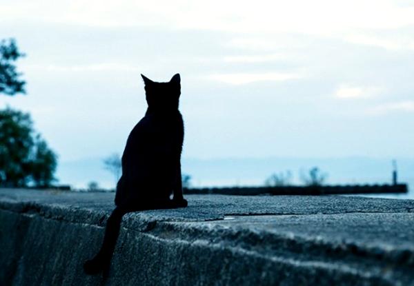 從毛色可以看出貓咪的個性--002--黑貓.jpg