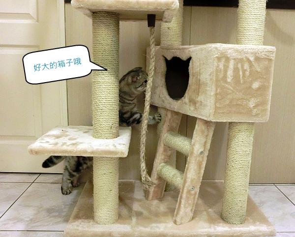 101--大貓跳台