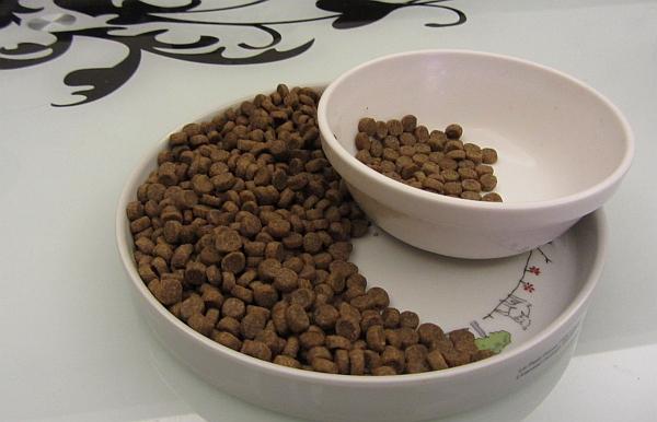 乾飼料餵食--瓷碗瓷盤