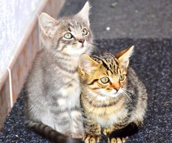 001_貓,愛滋,傳染