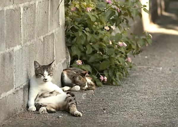 老師和流浪貓.電影.貓.jpg