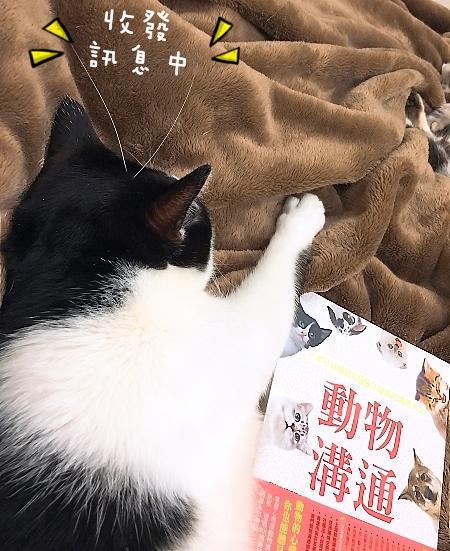 001_動物溝通師,寵物溝通師,原理,真的假的_2.jpg