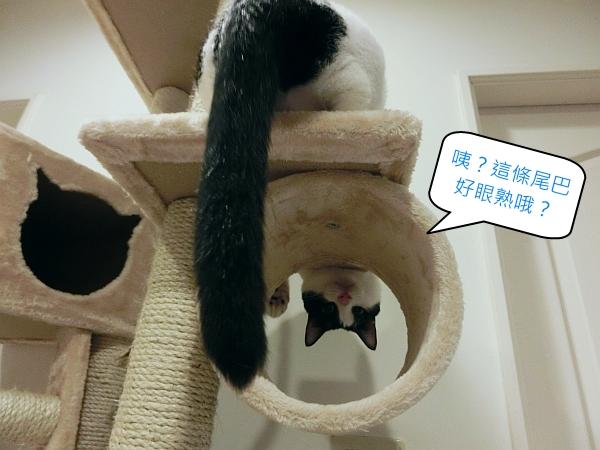 003--大貓跳台第二層圈圈
