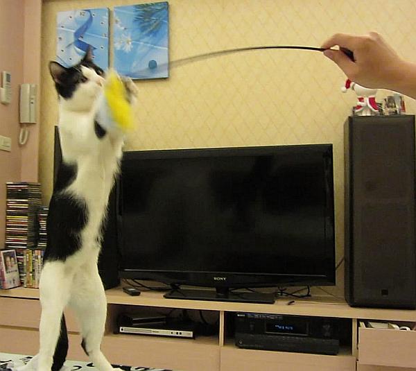 貓玩逗貓棒--002