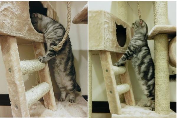 005--大貓跳台第二層