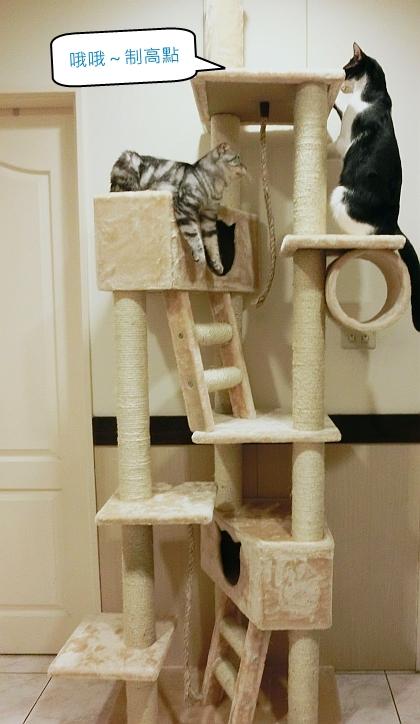 206--大貓跳台