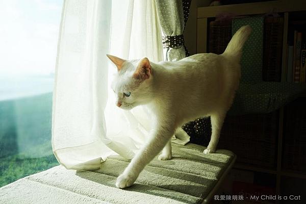 我愛陳明珠.My Child is a Cat-1.jpg