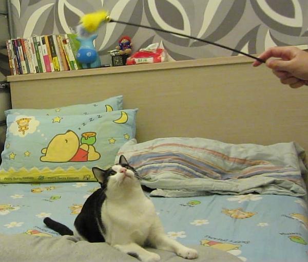 貓玩逗貓棒--003