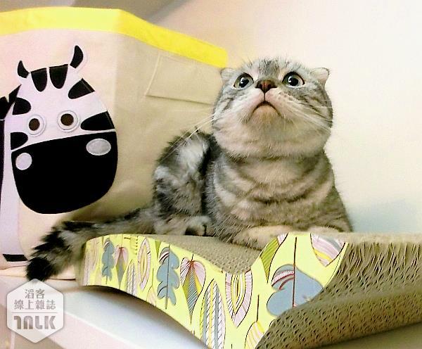 抓抓床.貓抓板.玩具--001.jpg