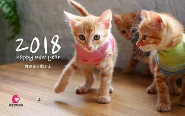 2018台灣愛貓協會_1.jpg