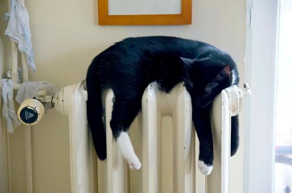 002_cat heater.jpg