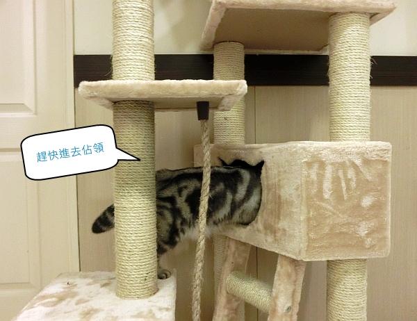 102--大貓跳台
