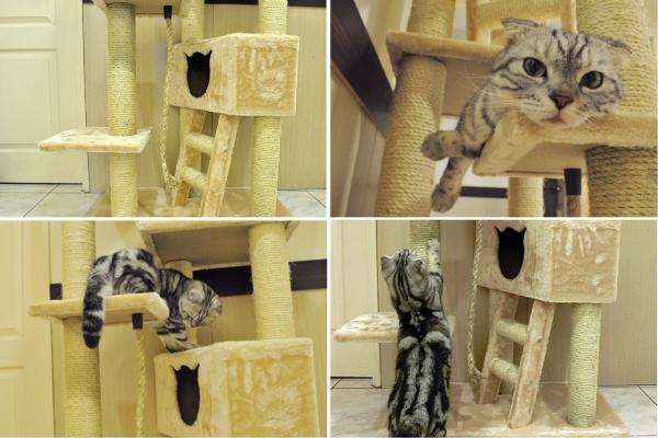 002--大貓跳台第一層