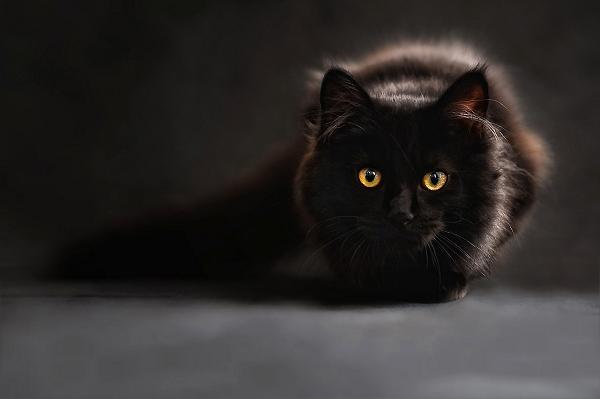 cat-694730_1280(CC0).jpg