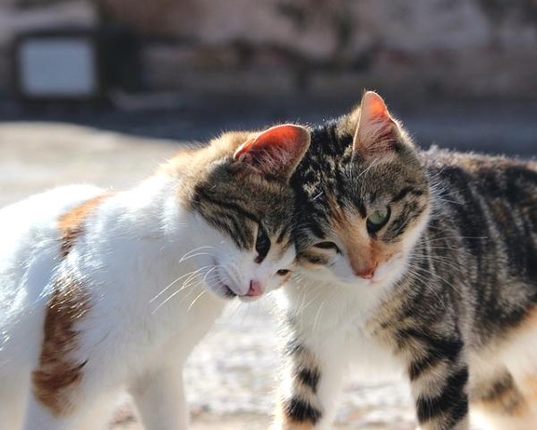 新手養貓前的自我檢視兼快速上手懶人包--003