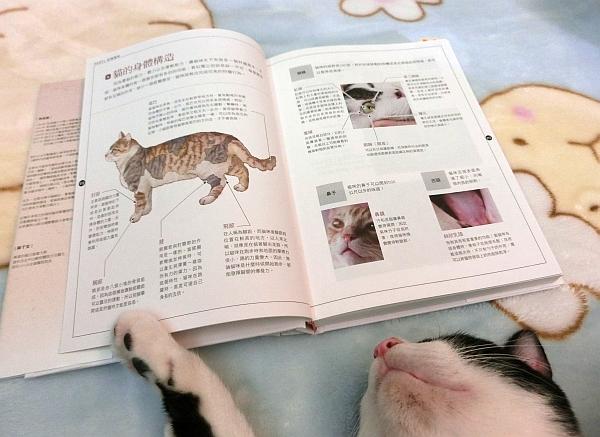 貓咪家庭醫學大百科--002
