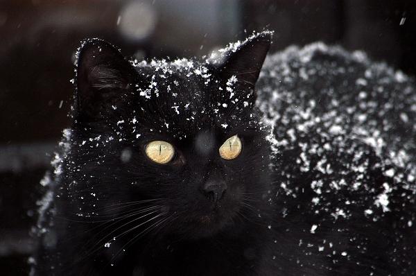 cat-1977416_1280(CC0).jpg