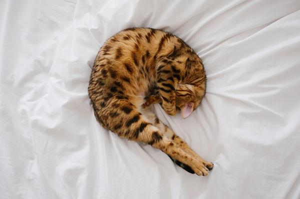 006_cat.jpg