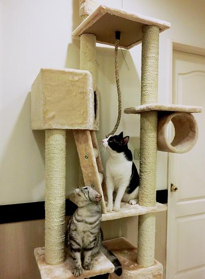 012--大貓跳台整體