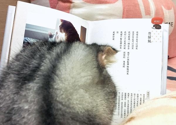 012_貓咪詩人.王谷柑.jpg