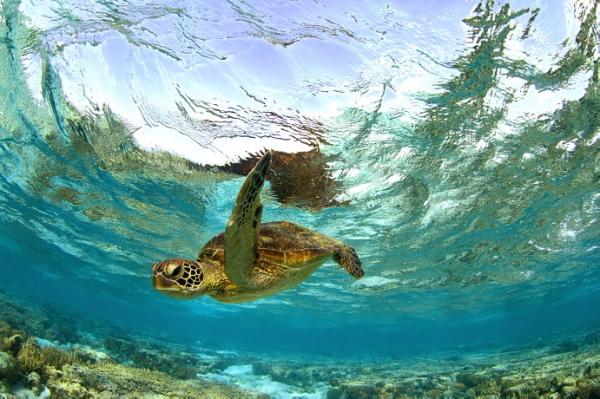 伊利特女士島周遭是許多珍稀海洋生物的棲地