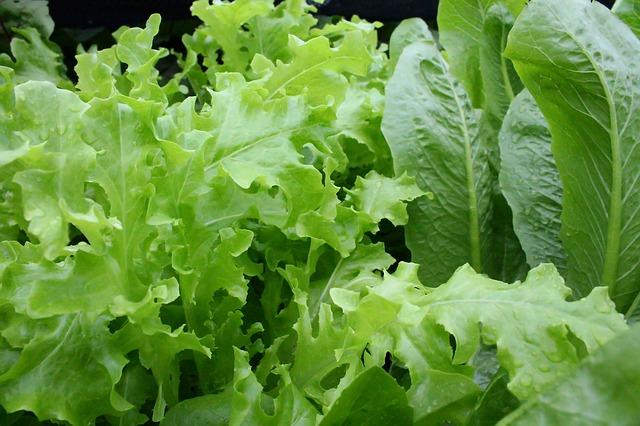 lettuce-811962_640